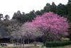 Sumomohanamomohyugamizuki090324